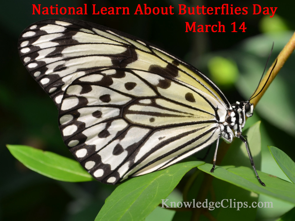 National Learn About Butterflies Day - Paper Kite