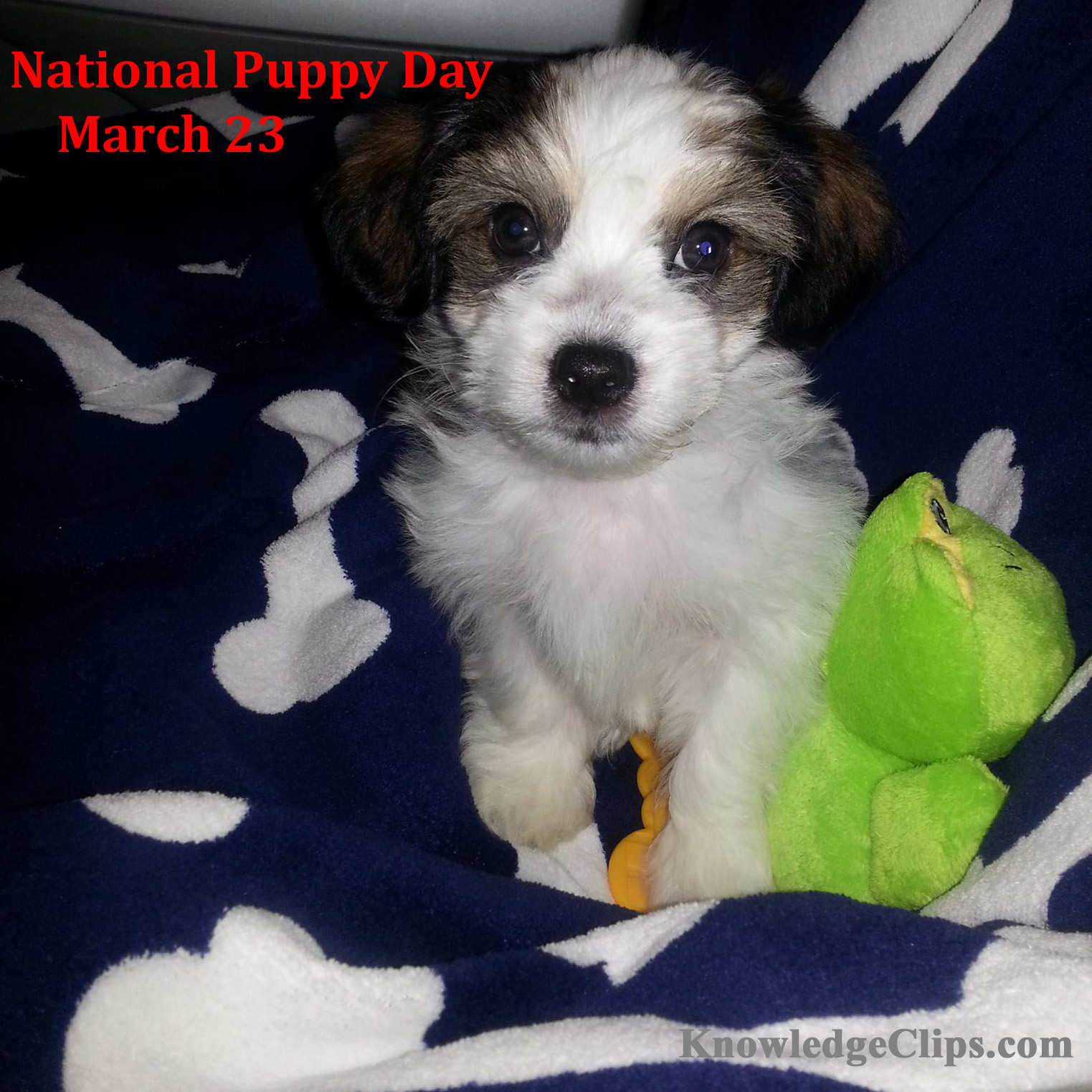 National Puppy Day - March 23