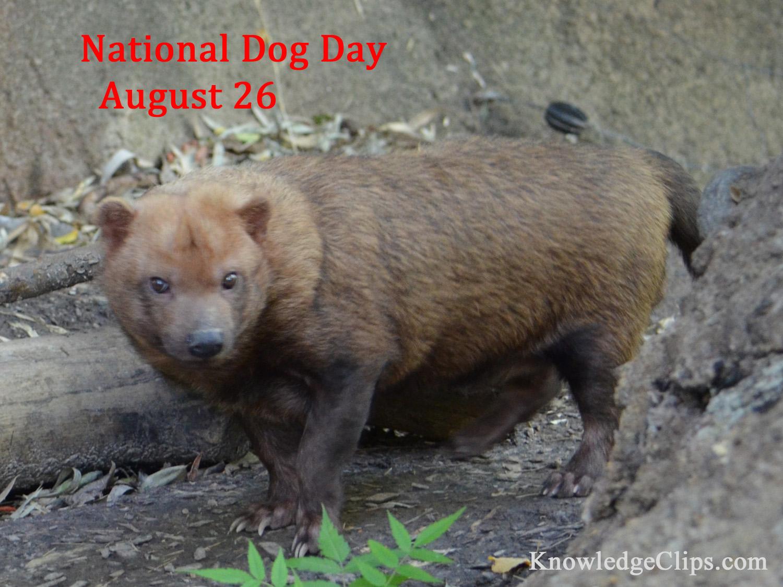 Natonal Dog Day - August 26