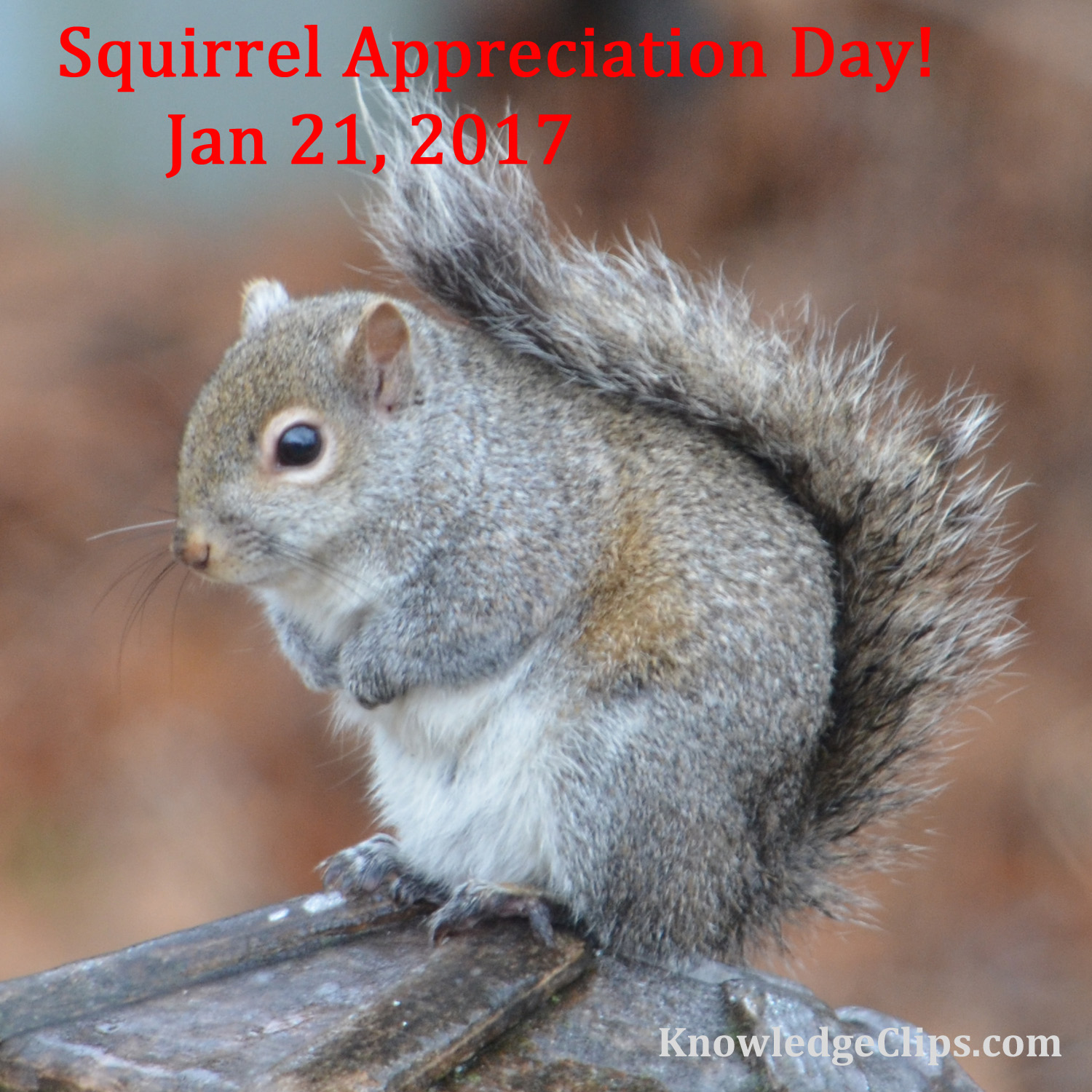 Squirrel Appreciation Day 2017