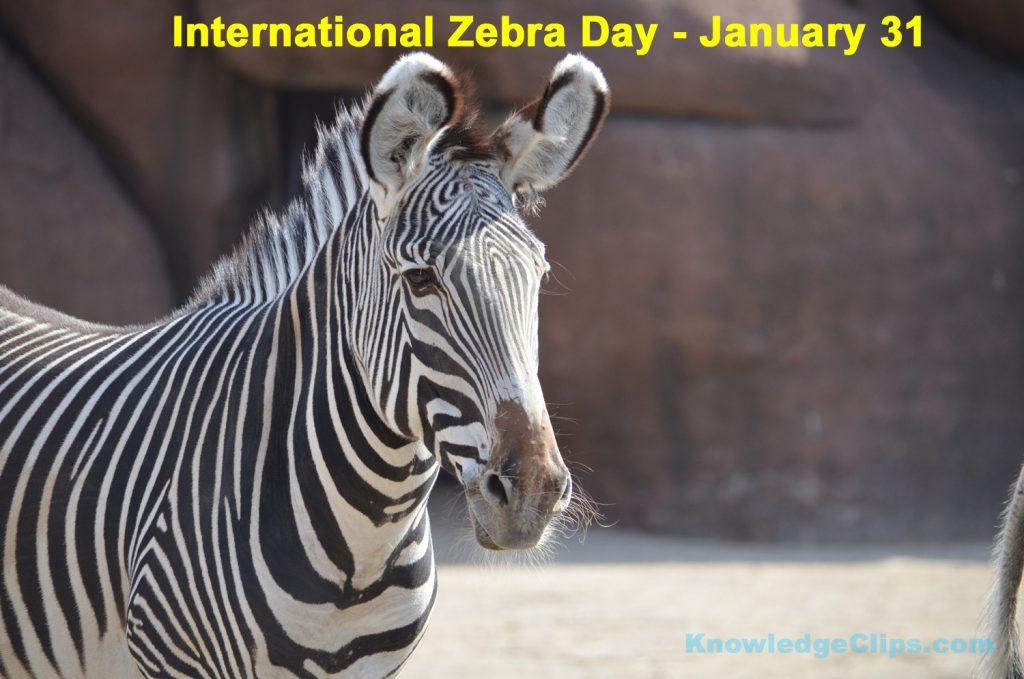 International Zebra Day 2021