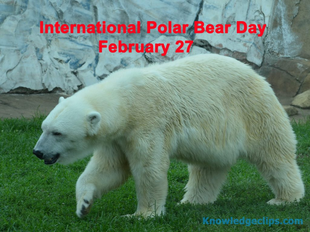 International Polar Bear Day 2021