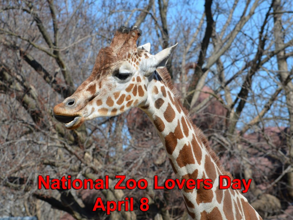 National Zoo Lovers Day 2021